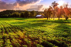 Rural scene. Beautiful evening scene in rural Kentucky Stock Image