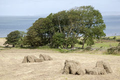 Rural Scene in Camp in Dingle Peninsula, Ireland Royalty Free Stock Photo