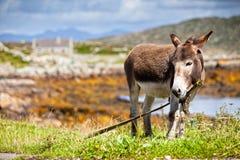 Rural Scene, Connemara, Ireland. Stock Photography