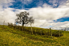 Rural scene on coutryside. With lone tree on green field Royalty Free Stock Photography