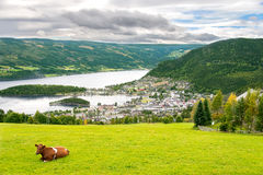 Rural scene with cow in Norway Stock Images