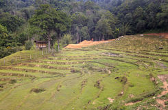 Rural scene deep inside Borneo Royalty Free Stock Photos