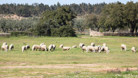 Rural scene deep inside Portugal at Beira Baixa province, Portugal Royalty Free Stock Image