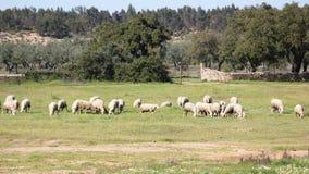 Rural scene deep inside Portugal at Beira Baixa province, Portugal. A rural scene nowadays deep inside Portugal at Monforte da Beira village, Castelo Branco Royalty Free Stock Image