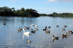 Rural Scene at Hornsea Mere. View of the mere at Hornse, East Yorkshire, UK Stock Images