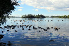 Rural Scene at Hornsea Mere. View of the mere at Hornse, East Yorkshire, UK Stock Photos
