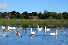 Rural Scene at Hornsea Mere. View of the mere at Hornse, East Yorkshire, UK Royalty Free Stock Photos