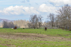 Rural scene with horses. Rural landscape with amazing sky and clouds, green hill and some horses in background Royalty Free Stock Photos
