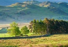 Rural scene, Lake District, UK Stock Image