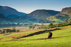 Rural scene, Lake District, UK Royalty Free Stock Photo