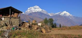 Rural scene in Nepal. Rural scene on the way from Tatopani to Gorepani, Nepal. Dhaulagiri range royalty free stock image