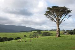 Rural Scene New Zealand stock photos