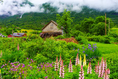 Rural scene with old wooden building. And flowers against misty hillside stock photo
