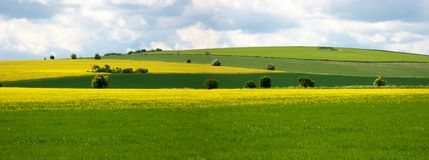 Rural scene on the ridgeway, england. Fields of rape seed and green grass with blue sky on the Ridgeway, England Royalty Free Stock Photos