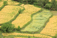 Rural scene in tibet Royalty Free Stock Photos