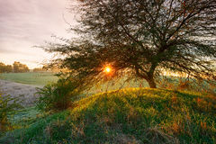 Rural scene with tree and sun Royalty Free Stock Images