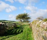 Rural Scene U.K. royalty free stock photography