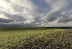 Rural scene. Under the cloudy sky Royalty Free Stock Image