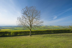 Rural scene view over fields. View over fields in the english countryside rural scene with tree Stock Images