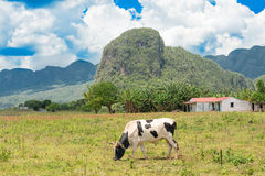 Rural scene at the Vinales Valley in Cuba stock image