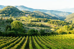 Rural scene with vineyard and hills Royalty Free Stock Image