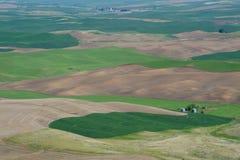 Rural scene of wheat field Royalty Free Stock Photo
