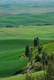 Rural scene of wheat field Stock Photos