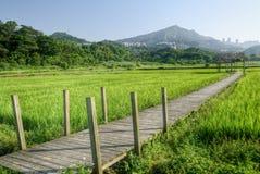 Rural scenery Stock Photo