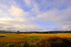 rural scenery Royalty Free Stock Photo