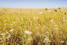 Rural scenery with beautiful yellow field Stock Photo