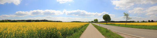 Rural scenery, country road through canola field. Panoramic rural scenery with country road and canola field royalty free stock photo