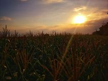 Rural scenery on evening with sunset background stock photo