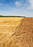 Rural scenery after harvest time. Rural scenery - stubble and plowed field under blue sky, vertical Stock Image