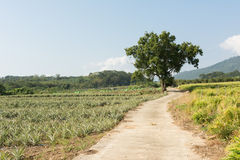 Rural scenery Royalty Free Stock Images