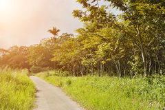 Rural scenery Stock Photos