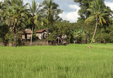 Rural scenery in Thailand Stock Photo