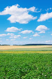 Rural scenic landscape Royalty Free Stock Photos