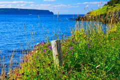 Rural Seaside Landscape at Portugal Cove - St. Philip`s, Newfoundland, Canada. Colourful image of seaside wildflowers, grasses and a fence post at Portugal Cove royalty free stock image