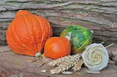 Rural setting with pumpkins Stock Images