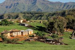 Rural settlement and livestock. Rural settlement with livestock, South Africa Royalty Free Stock Photography