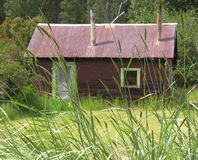Rural Shack. A dark red shack is a country home, focus is on tall grass in foreground Royalty Free Stock Photos