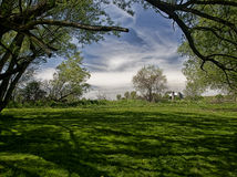 Rural shade. A tree limb arches over a grassy field, creating shade on a sunny day in the country Stock Images