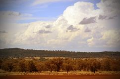 Rural sheep grazing landscape in NSW. Rural landscape scene with red soil and sheep on farmland under a cloud filled blue sky between the towns of Grenfell and royalty free stock photography