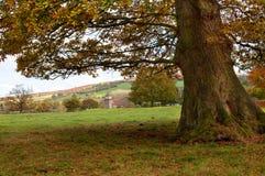 Rural Shropshire Royalty Free Stock Photography