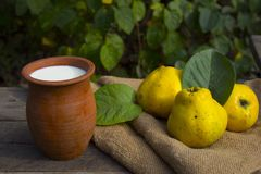 Quince and milk. Rural sketches, quince, milk Royalty Free Stock Photography