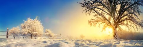 Tranquil winter landscape in the morning royalty free stock photo