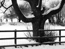 Rural snow scene Stock Photos