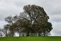 Rural Somerset Royalty Free Stock Photo