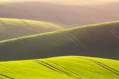 Rural spring agriculture texture background. Green waves hills in South Moravia, Czech Republic during sunset. Green fields landsc stock photography