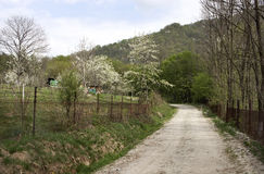 Rural spring - RAW format Royalty Free Stock Photography